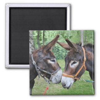 Two donkeys saying hello magnet