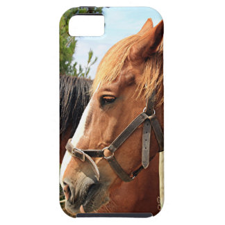 Two draft horses iPhone 5 cover
