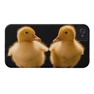 Two ducklings looking at one another iPhone 4 cases