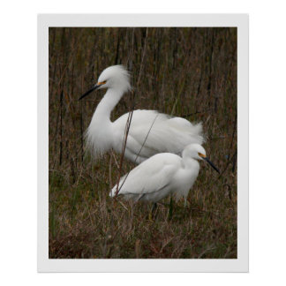 Two Egret Birds Wildlife Animals Print