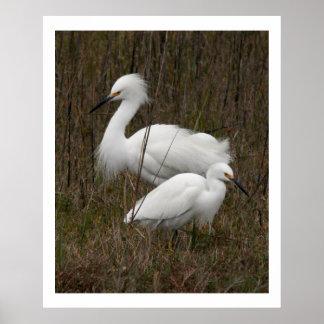 Two Egret Birds Wildlife Animals Print