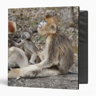 Two female Golden Monkeys with newborns 3 Ring Binder
