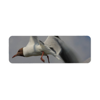 two flying gulls return address label
