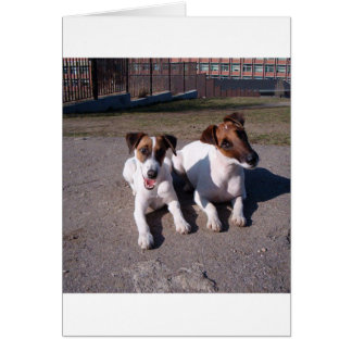 Two_fox_terriers_laying_down Card