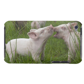 Two Funny Cute Playful Piglets Barely There iPod Covers