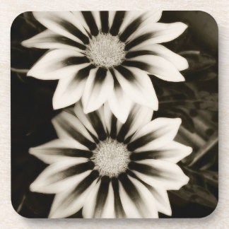 Two Gazania Flowers Black And White Coasters