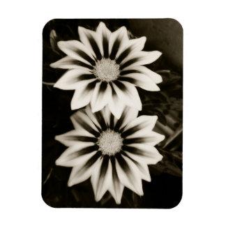 Two Gazanias Black And White Magnet