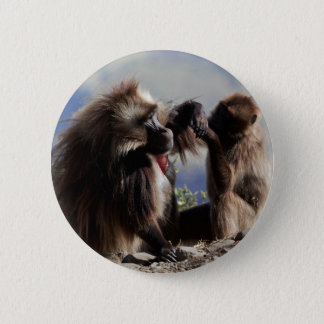 Two gelada baboons (Theropithecus gelada) 2 Inch Round Button