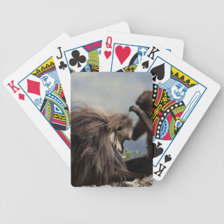 Two gelada baboons (Theropithecus gelada) Bicycle Playing Cards
