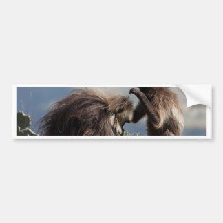 Two gelada baboons (Theropithecus gelada) Bumper Sticker