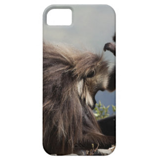 Two gelada baboons (Theropithecus gelada) Case For The iPhone 5