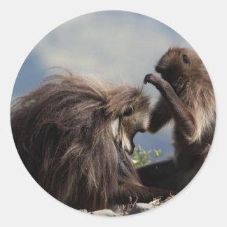 Two gelada baboons (Theropithecus gelada) Classic Round Sticker