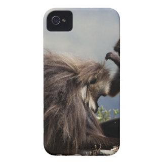 Two gelada baboons (Theropithecus gelada) iPhone 4 Case-Mate Case