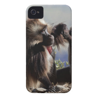Two gelada baboons (Theropithecus gelada) iPhone 4 Case-Mate Cases
