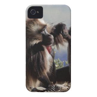 Two gelada baboons (Theropithecus gelada) iPhone 4 Cover