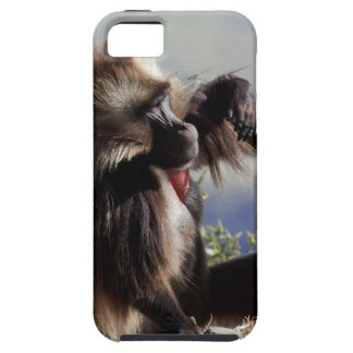 Two gelada baboons (Theropithecus gelada) iPhone 5 Case