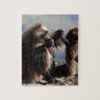 Two gelada baboons (Theropithecus gelada) Jigsaw Puzzle
