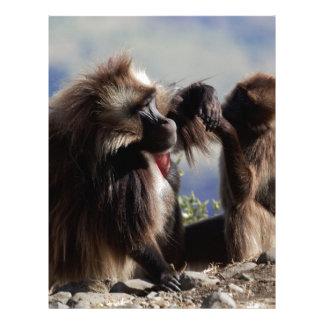 Two gelada baboons (Theropithecus gelada) Letterhead