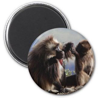 Two gelada baboons (Theropithecus gelada) Magnet