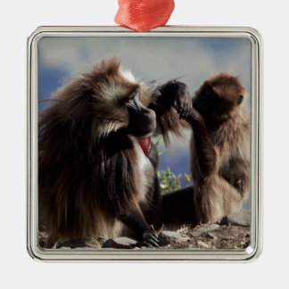 Two gelada baboons (Theropithecus gelada) Metal Ornament