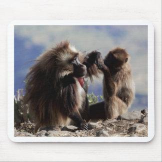 Two gelada baboons (Theropithecus gelada) Mouse Pad