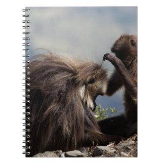Two gelada baboons (Theropithecus gelada) Notebook