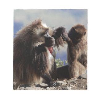 Two gelada baboons (Theropithecus gelada) Notepad