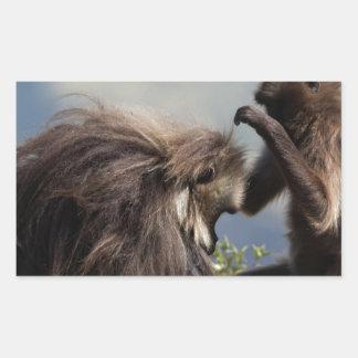 Two gelada baboons (Theropithecus gelada) Sticker