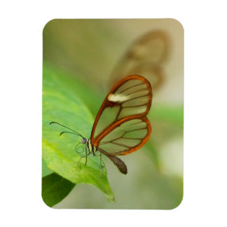 Two Glass winged butterflies Magnet