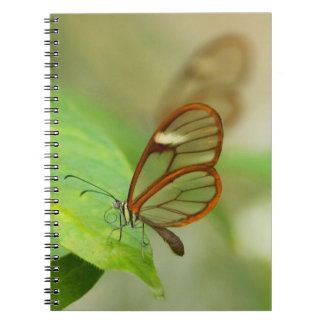 Two Glass winged butterflies Notebook