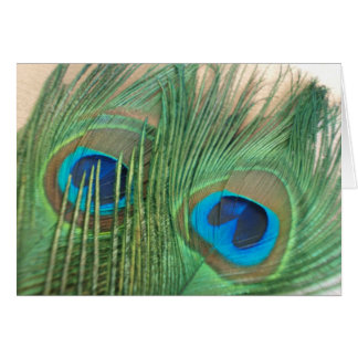 Two Golden Peacock Feathers Card