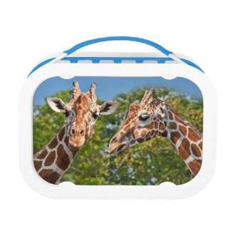 Two Gossiping Giraffes Lunch Box