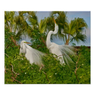 Two Great Egret Birds Print