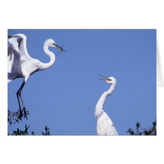 Two Great Egrets (Ardea alba) in a courtship Card