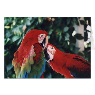 """""""Two Green Wing Macaws"""" Birdc Photo Greeting Card"""