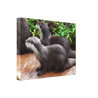 Two Grey Otters, Canvas Print