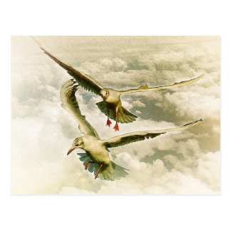 Two gulls postcard