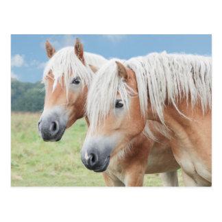 two Haflinger Postcard