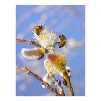 Two happy honey bees gathering nectar, postcard