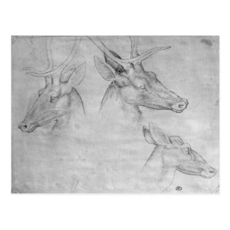 Two heads of stags, one head of a doe postcard