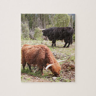 Two highland cattle, Scotland Jigsaw Puzzle