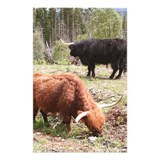 Two highland cattle, Scotland Stationery Paper