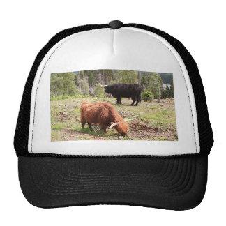 Two highland cattle, Scotland Trucker Hat