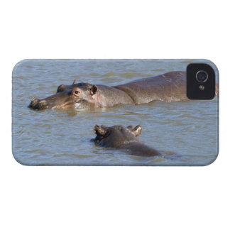 Two hippos in a river, Kruger National Park, iPhone 4 Case-Mate Cases