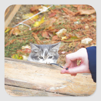 Two homeless kitten playing with a stick square sticker