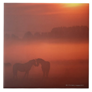 Two horses at sunset tile