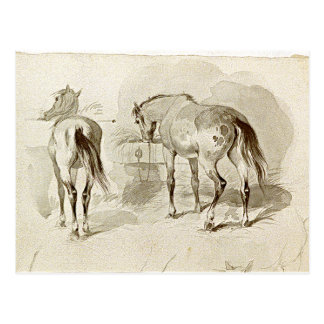 Two Horses at the Manger Postcard