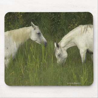 Two horses eating grass mouse pad