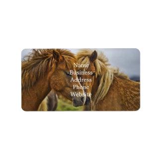 Two horses portrait