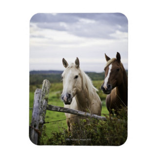 Two horses stand near fence in farm field of off magnet